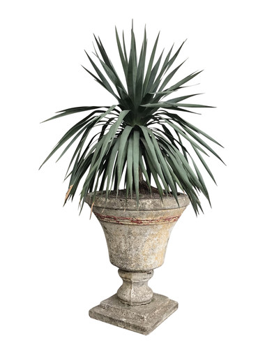 19th Century French Planter with Cactus 34901